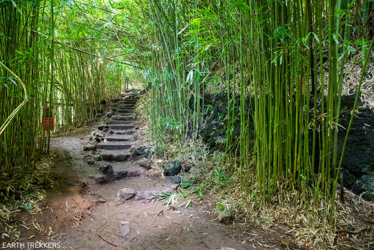Start of the Bamboo