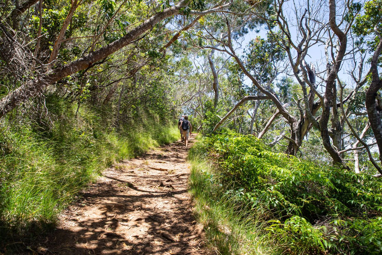 Awaawapuhi Trail Photo