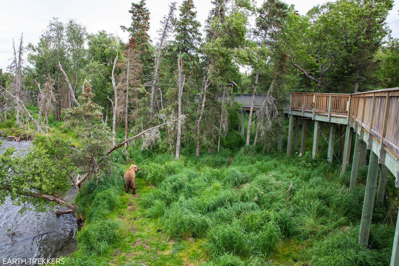 Bear By Falls Viewing Platform