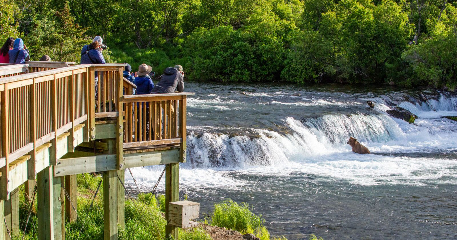 Brooks Falls