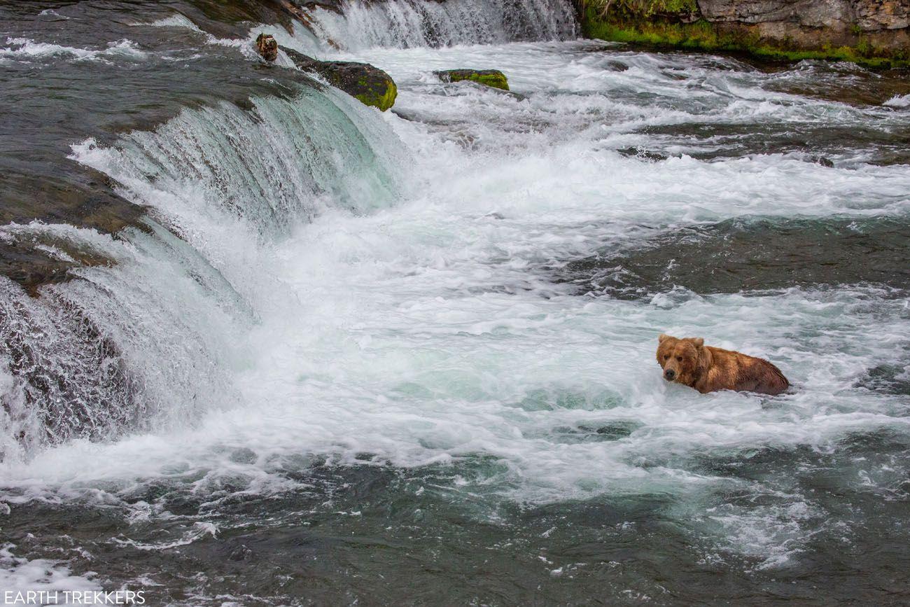 Brooks Falls No Salmon