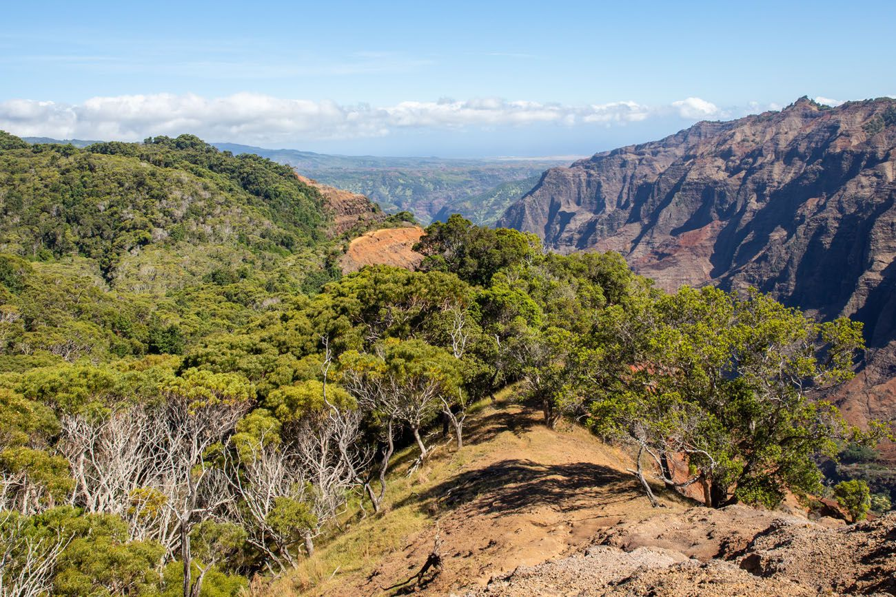 Cliff Trail View