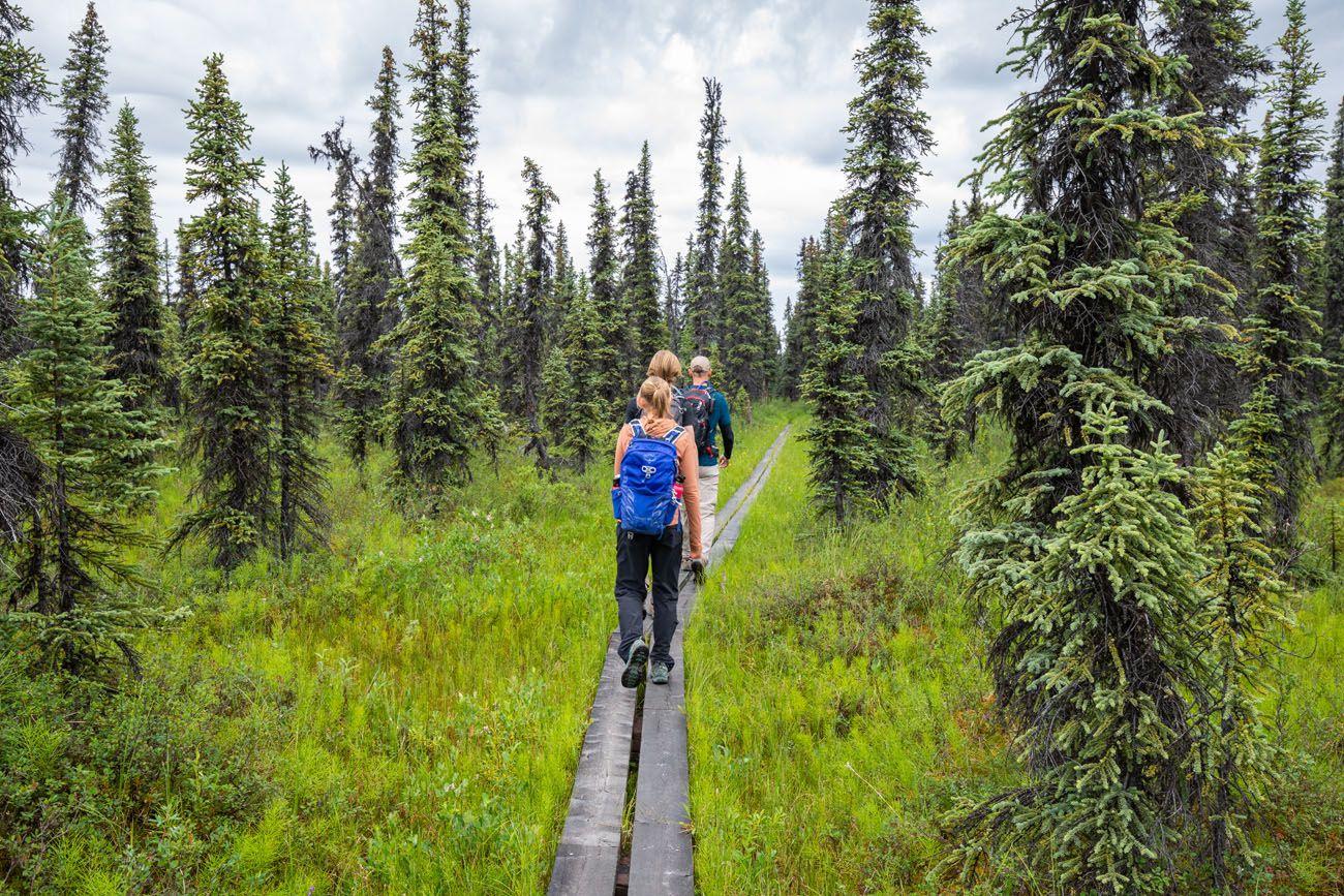 Denali Hiking