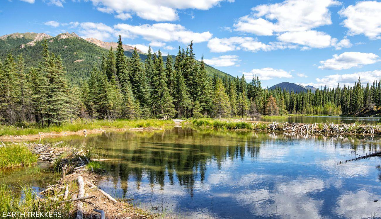 Easy Hikes in Denali