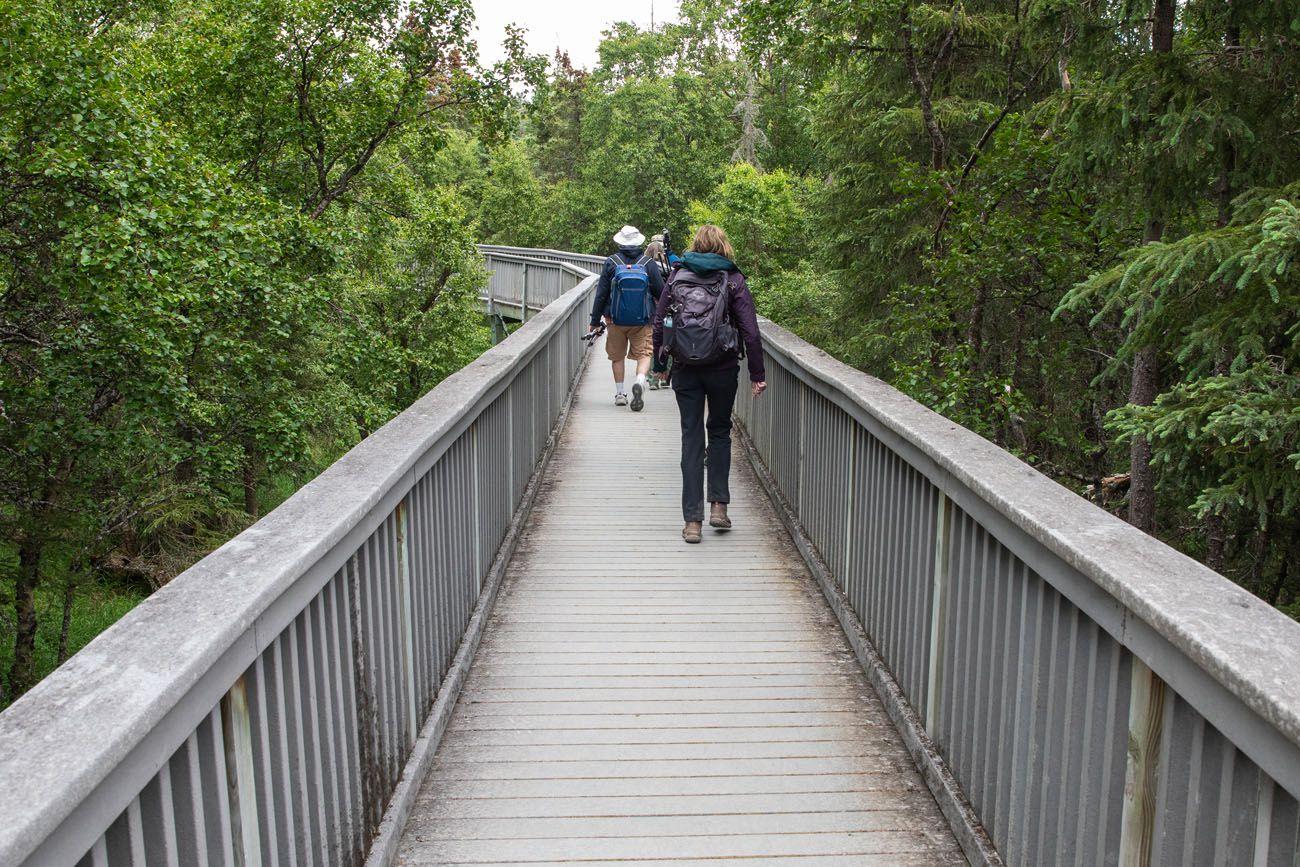 Katmai Boardwalk Trail