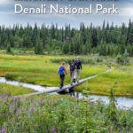 McKinley Bar Trail Denali National Park
