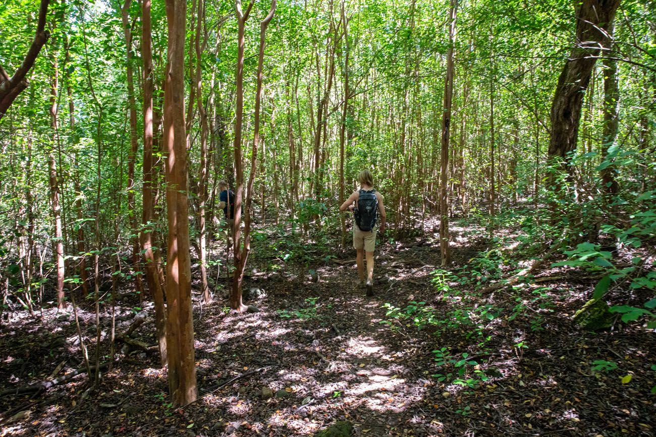 Nualolo Cliff Trail Forest