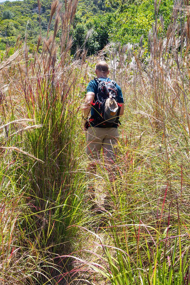 Nualolo Cliff Trail Grasses