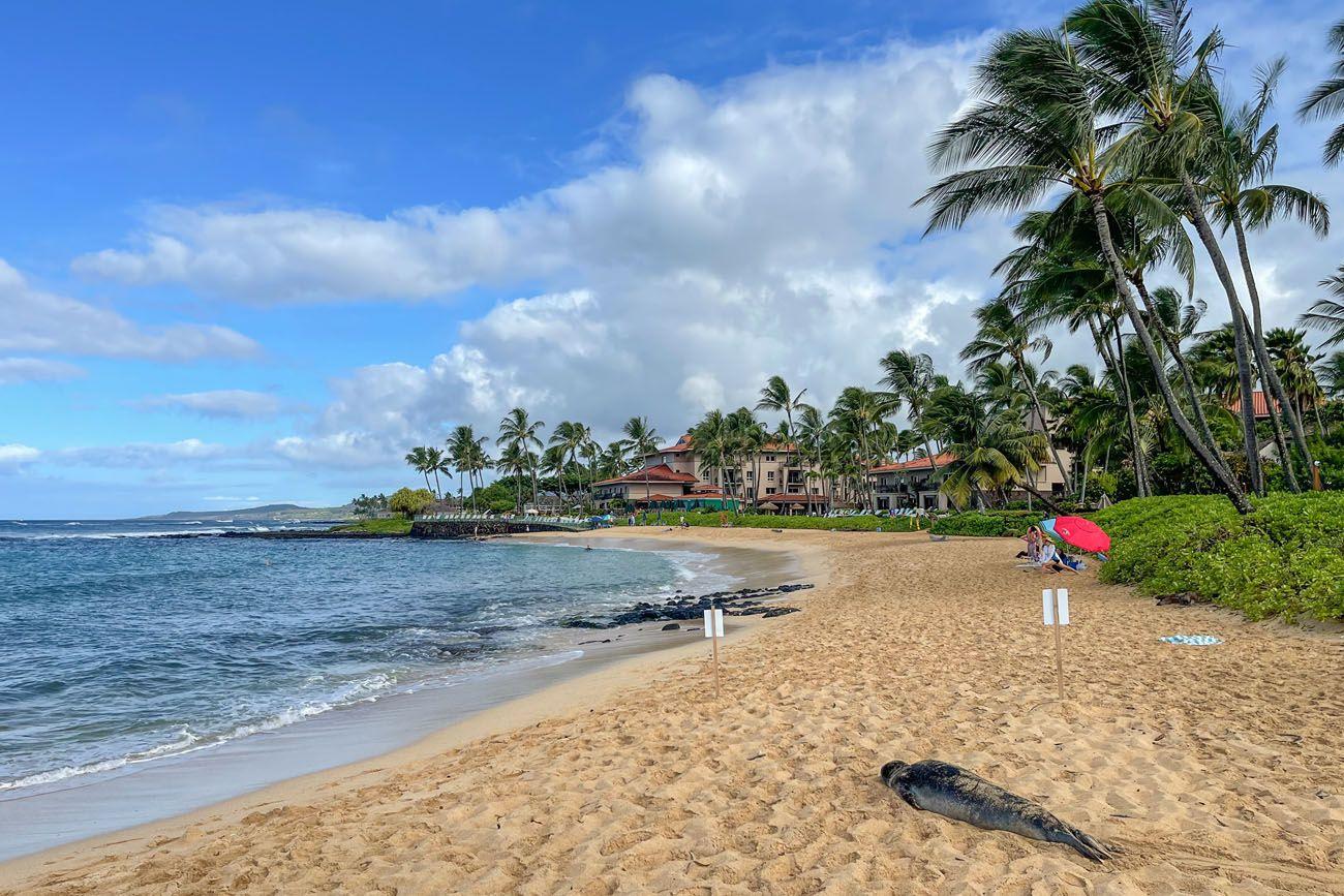 Seal at Poipu Beach best things to do in Kauai
