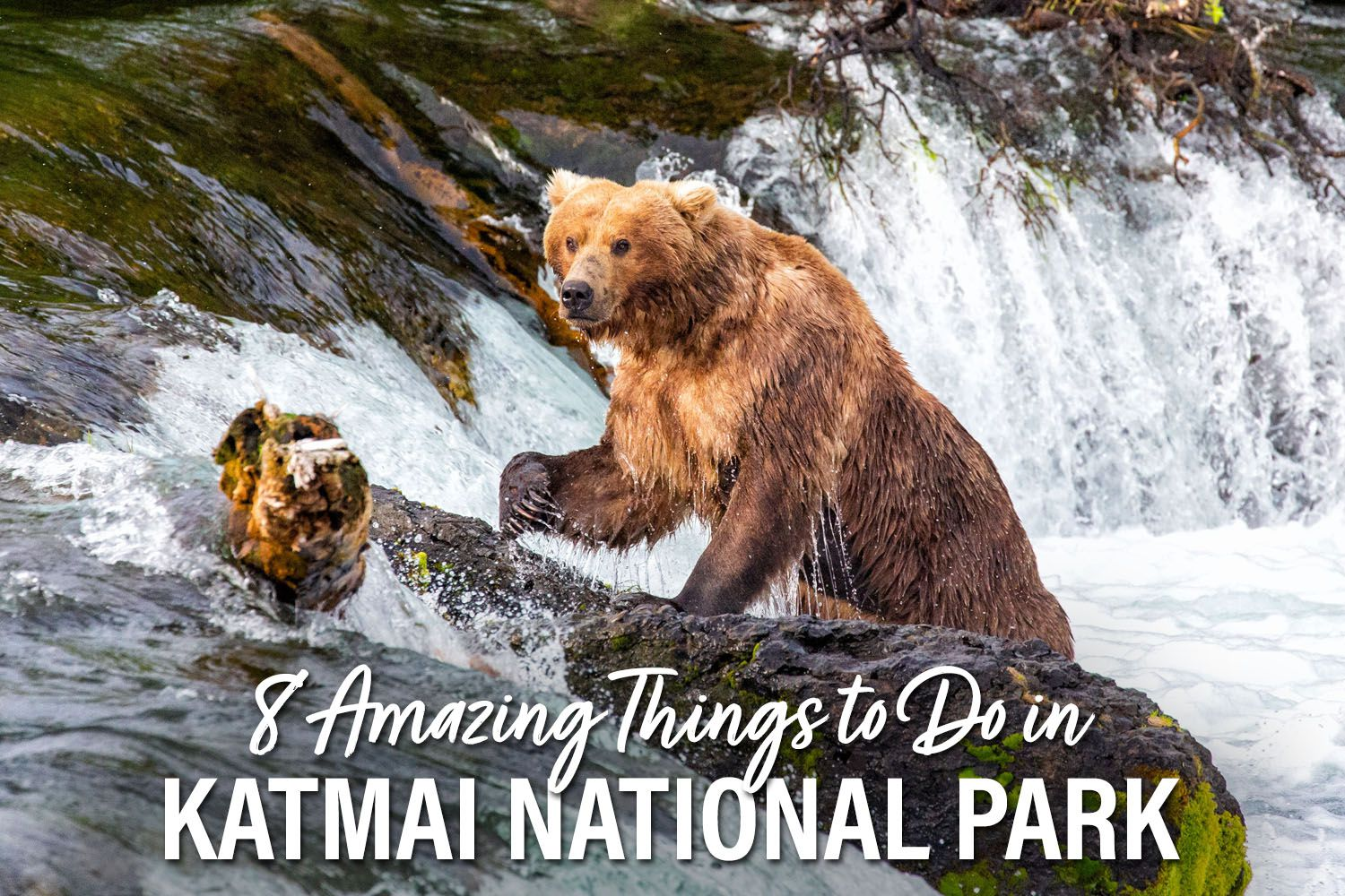 Things to do in Katmai